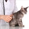 Ветеринарные клиники в Губахе